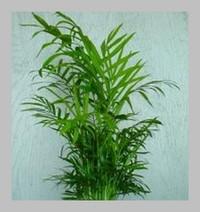 Plante pour salle de bain sombre maison design for Plante pour salle de bain sombre